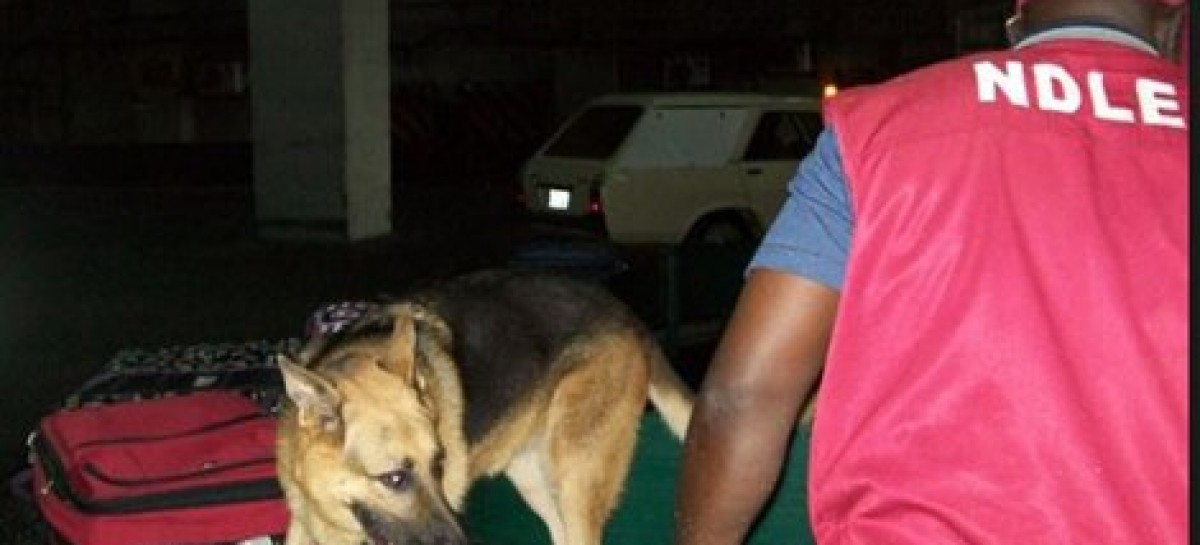 Ojukwu's niece, NDLEA officer nabbed for importing cocaine