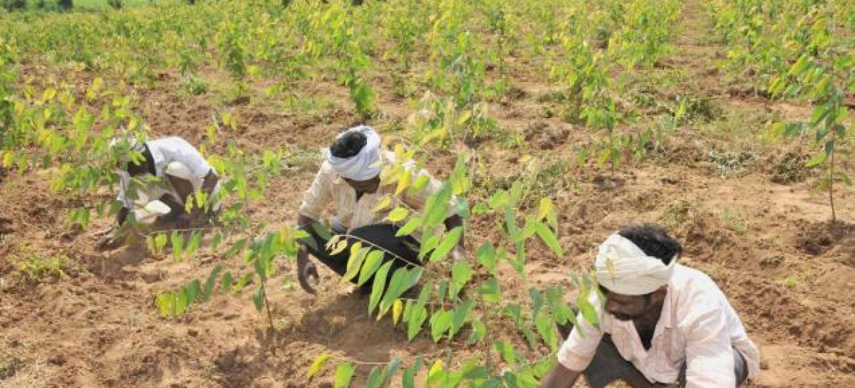 Technological innovation will boost productivity, growth in Africa's agribusiness – Report