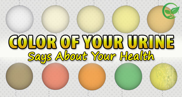 what the urine color says about your health thinkers newspaper - Rsine Colore