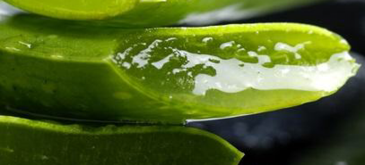 The miracle plant aloe vera and its 25 uses