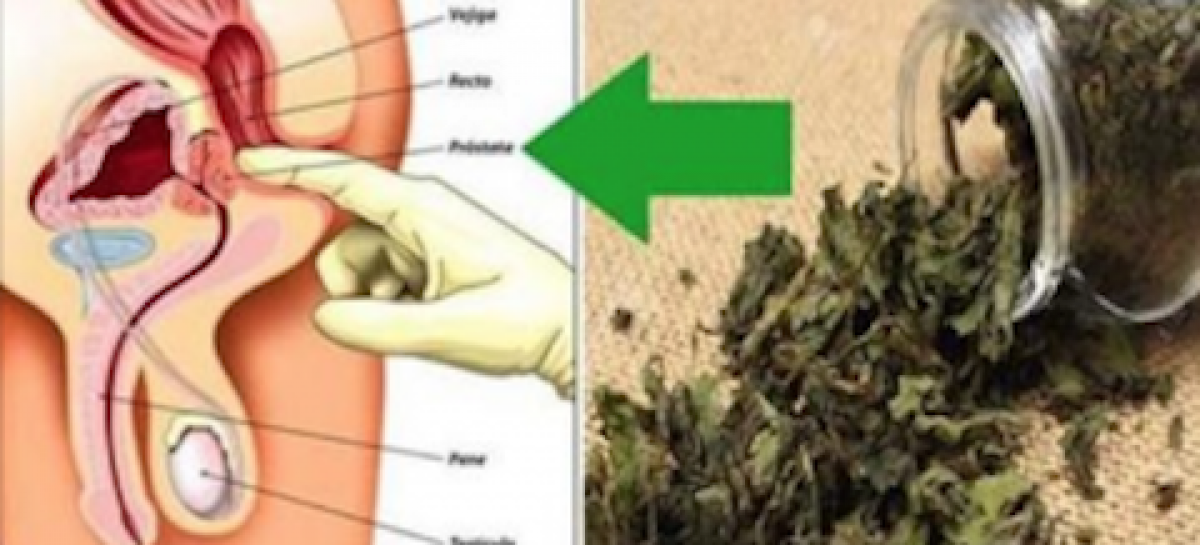 This plant disinflames prostate, prevents cancer and removes diabetes