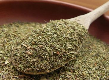 Powerful herb that destroys strep, herpes, candida and flu virus