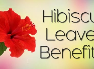 10 top benefits of Hibiscus leaves