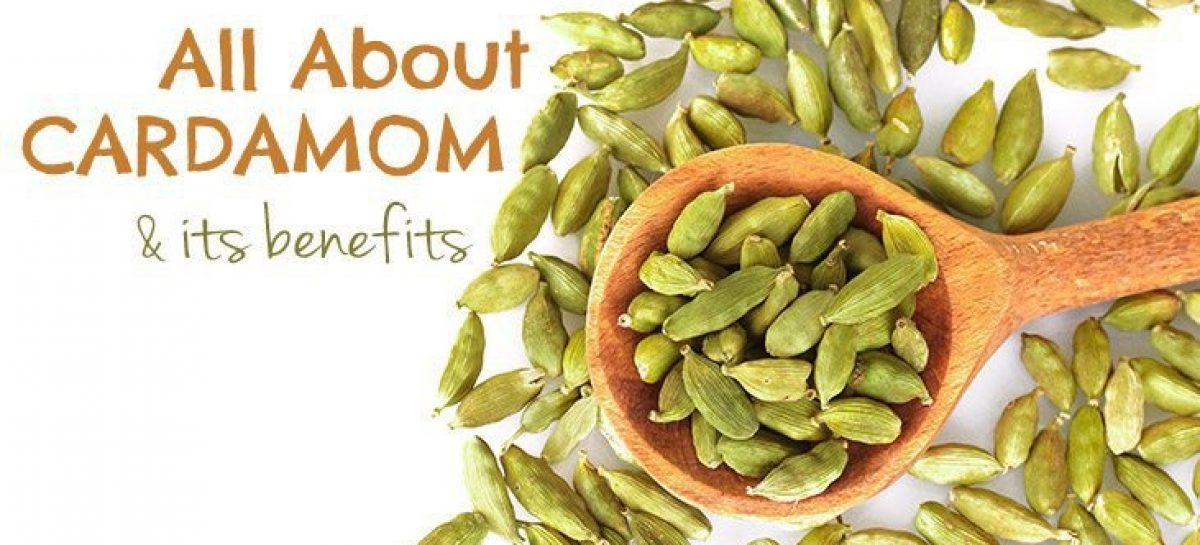 All about cardamom and its health benefits