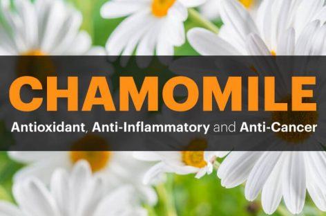 Chamomile Benefits: Antioxidant, anti-inflammatory and anti-cancer