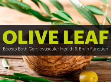 Olive leaf benefits for cardiovascular health & brain function