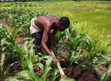 Farmers have started repaying anchor borrowers' programme loans – CBN