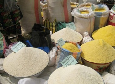 Lassa Fever: Health workers warn Nigerians to stop consuming garri