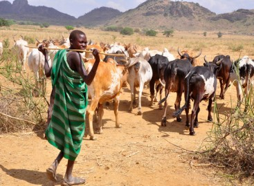 ECOWAS to introduce regional cattle rearing policy