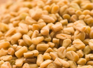 Benefits of fenugreek powder for health
