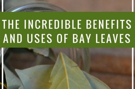 Incredible benefits and uses of bay leaves