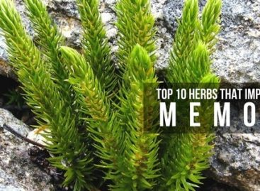 Top 10 herbs that improve your memory naturally