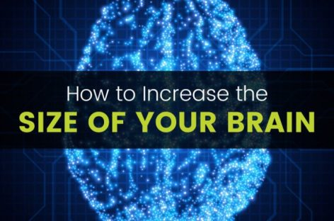 These 10 things literally increase the size of your brain
