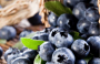 Health Benefits Of Blueberries By Falmata Zanna
